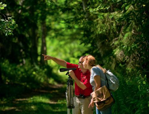 Tourisme Montmagny et les Îles offre cet été de découvrir la Réserve naturelle Jean-Paul-Riopelle sous une toute nouvelle formule