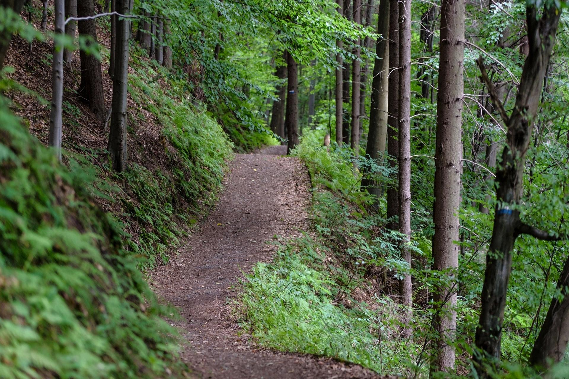 Sentier en forêt au Québec